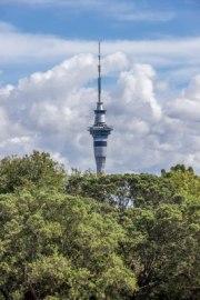 Auckland-7479