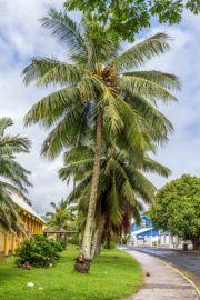 Rarotonga-6927