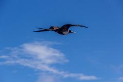 Bird-0709