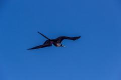 Bird-0710