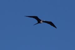 Bird-0717