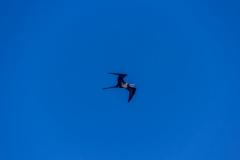 Bird-0723