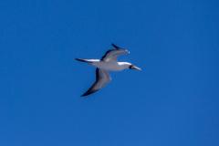 Bird-0733