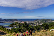 Wellington-7979