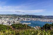 Wellington-7993